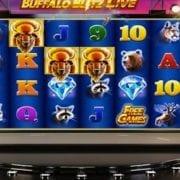 Playtech Raises The Live Casino Bar With Buffalo Blitz