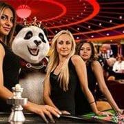 Royal Panda Online Casino Exits The UK Market
